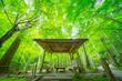 Leinwanddruck Bild - 松島の円通院のお庭
