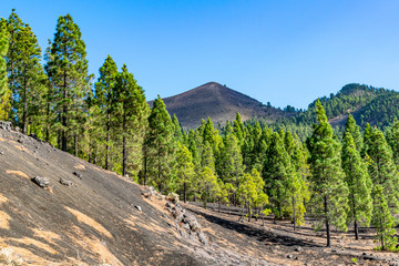 Volcanic landscape and pine forest at astronomy viewpoint Llanos del Jable, La Palma, Canary Islands, Spain