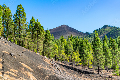 Fotografia  Volcanic landscape and pine forest at astronomy viewpoint Llanos del Jable, La P