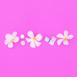 Leinwandbild Motiv Tropical white flower on pink background. Plants on pink concept