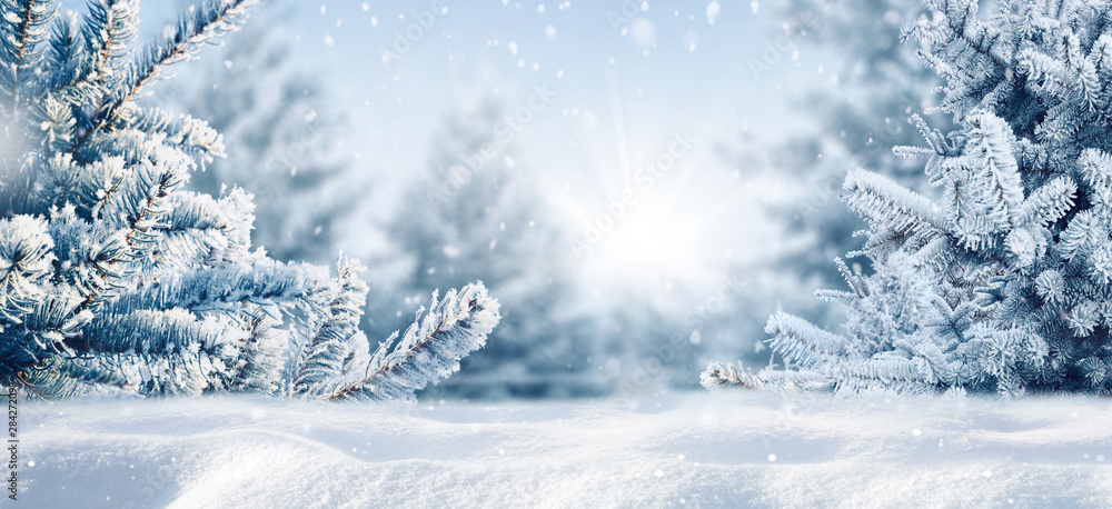 Fototapeta Blue winter christmas nature background frame, wide format. Snow-covered fir branches, snowdrift against defocused blurred forest and falling snow. Close-up, copy space.