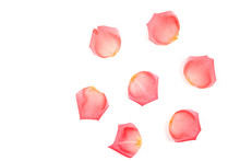 Roses And Rose Petals Isolated On White Background. Photo Design For Beauty Short And Cosmetic Mock Up Design Element.