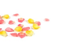 Roses And Rose Petals Isolated...