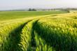 Leinwandbild Motiv Tracks leading away through green field. Pure natural beauty, fresh green tones, spring time.