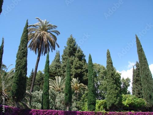 Photo masa arborea jardin botanico la concepcion malaga