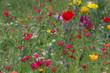 Rodzynek wśród kwiatów