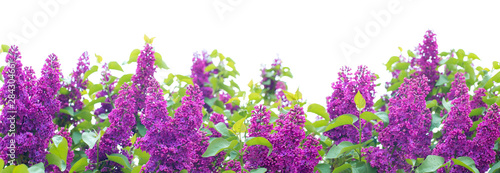 Photo sur Toile Lilac Background consisting of lilac flowers.