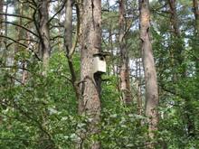 Budka Dla Ptaków W Lesie