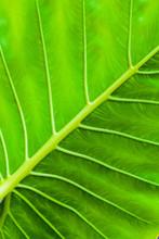 Tropical Green Leaf, Vertical Background