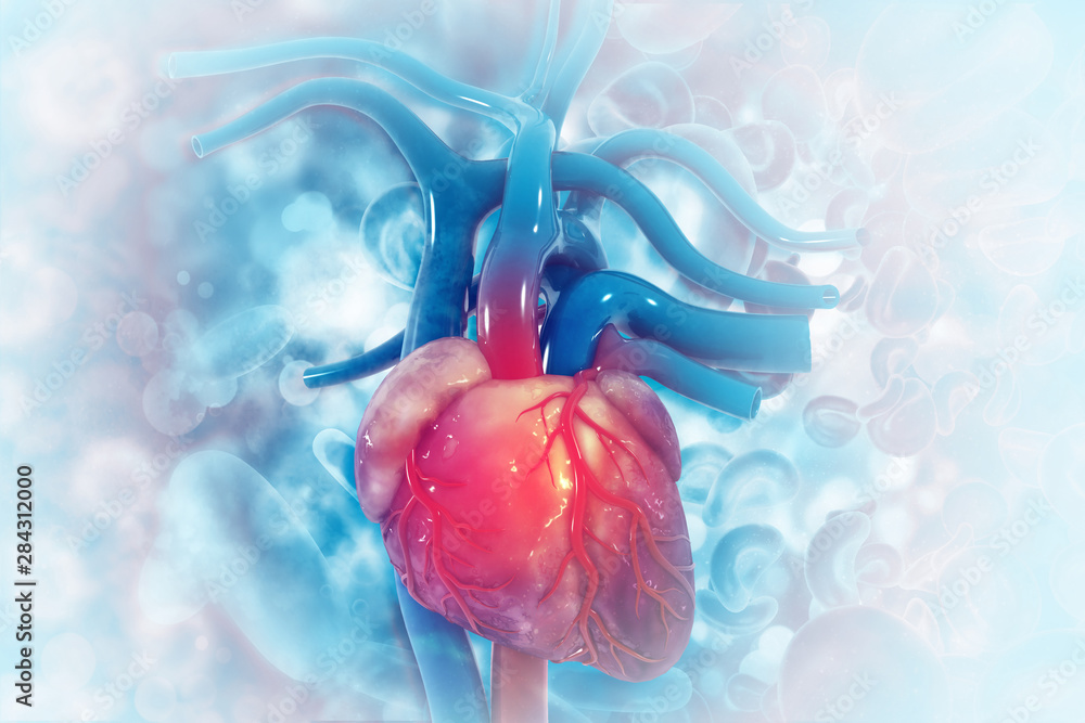 Fototapety, obrazy: Human heart on scientific background