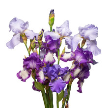 Multicolored Bouquet Iris Flower Isolated On White Background. Easter. Summer. Spring. Flat Lay, Top View. Love. Valentine's Day