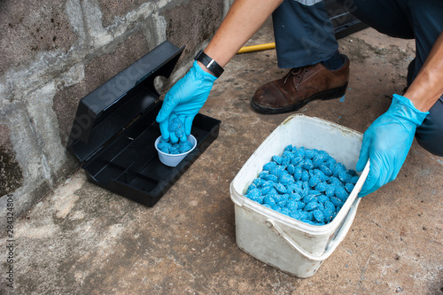 Fotomural  Get rid of rat using  bait poison box, pest control in industry.