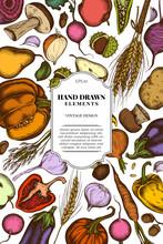 Card Design With Colored Onion, Garlic, Pepper, Mushroom, Acorn, Rye, Chestnut, Birch, Radish, Apples, Pears, Potatoes, Beet, Carrot, Pumpkin, Eggplant