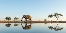 Africa, Botswana, Chobe National Park, African Elephant (Loxodonta Africana) Stands At Edge Of Water Hole In Savuti Marsh