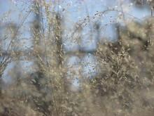 Close-up Shot Of Dry Wild Gras...