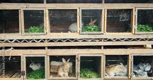 Obraz na plátně  rabbits in a cage