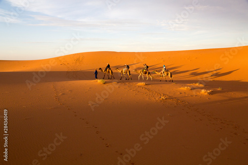 Fotografering  Africa, Morocco, Tafilalet, Erfoud, Merzouga, Erg Chebbi, late afternoon shadows of Dromedary (Camelus dromedarius) camels and caravan led by Tuareg man in traditional Blue clothing