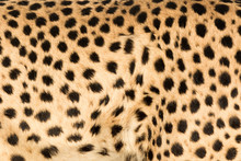 Africa, Namibia, Keetmanshoop. Close-up View Of Cheetah Fur.