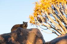 Africa, Namibia, Keetmanshoop....