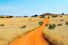 Red Sand Road In Kgalagadi Transfrontier Park, South Africa