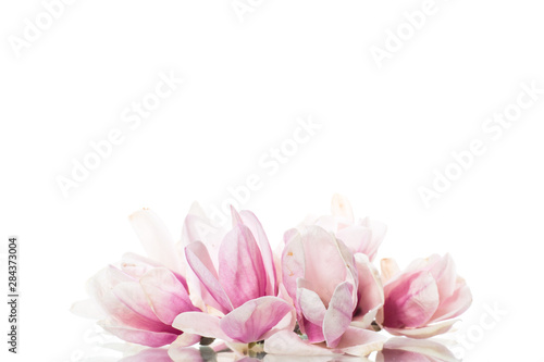 spring beautiful blooming magnolia on a white Wallpaper Mural