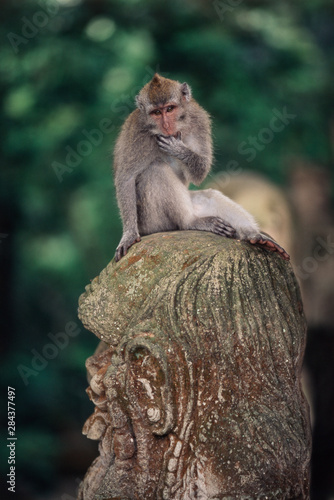 Papiers peints Commemoratif Indonesia, Bali, Ubud, Long-tailed Macaque resting in monkey forest sanctuary