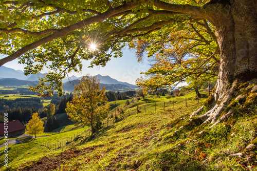 Fotobehang Landschappen panoramic landscape in Bavaria at autumn