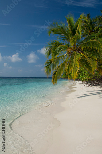 Maldives, North Male Atoll, Island of Kuda Bandos. Palm trees on white sand beach.