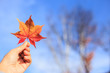 canvas print picture - Human hand holding a red autumn maple leaves against the background of a blue sky with white clouds.