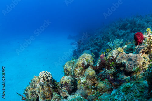 Colorful corals in the foreground of this underwater photograph of a coral reef along the north coast of Cuba