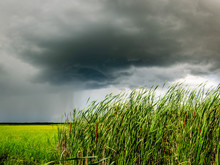 Storm Clouds Over A Grouping Of Cattails