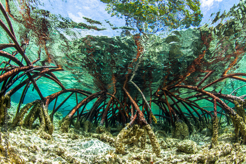 Fotomural Underwater photograph of a mangrove tree in clear tropical waters with blue sky