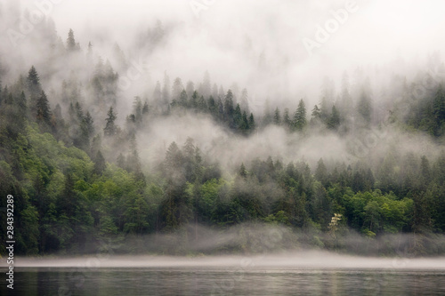 Obraz Canada, British Columbia, Fiordlands Recreation Area. Fog-shrouded forest next to ocean inlet.  - fototapety do salonu