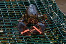 Canada, New Brunswick, Shediac, Pointe-du-Chene. Tourist Lobster Scenic Dinner Cruise, Freshly Caught Lobster.