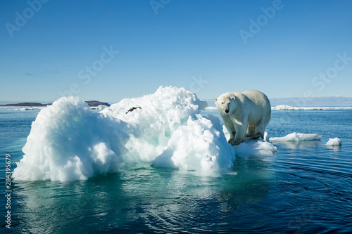 Spoed Fotobehang Ijsbeer Canada, Nunavut Territory, Polar Bear (Ursus maritimus) climbing onto melting iceberg floating in Frozen Strait near Arctic Circle along Hudson Bay