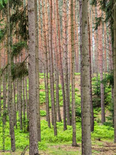 Czech Republic. Forest area in the Czech Paradise (Cesky Raj) region of Bohemia.