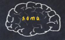 Drawind Of Human Brain On Chalkboard With Inscription Soma
