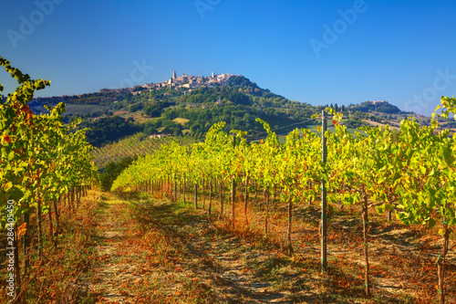 Fotografie, Obraz Italy Umbria, Todi, Vineyards looking at the hillside town of Todi
