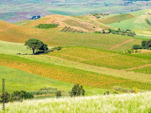 Photo Alcamo countryside