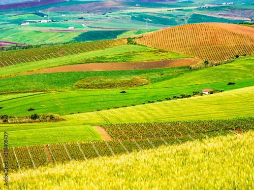 Fotografía Alcamo countryside