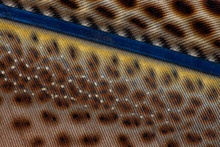 Close-up Of Argus Pheasant Wing Feathers.