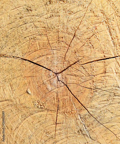 The sawn tree and its year rings - 284422089