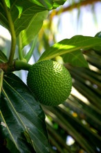 South Pacific, French Polynesi...