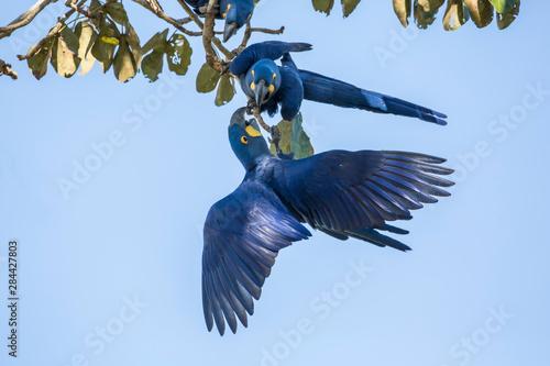 Pantanal, Mato Grosso, Brazil Tablou Canvas