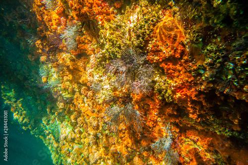 Mexico, Baja California Sur, Isla San Jose Canvas-taulu