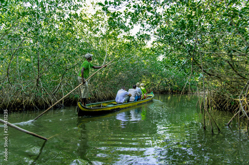 Canoeing through the mangrove, manglare, swamps of La Cienaga de la Vorgin near historic Cartagena, Colombia Wallpaper Mural
