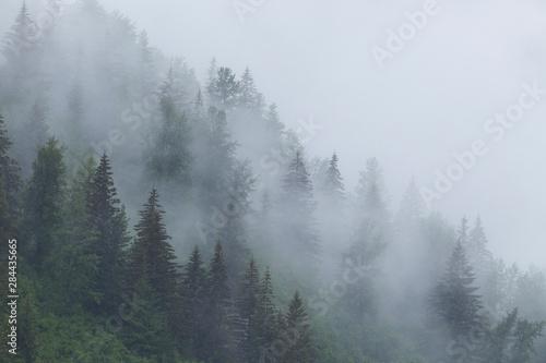 Foto auf Gartenposter Wald Alaska, Glacier Bay National Park. Fog shrouds trees on steep slopes in the Tongass National Forest.