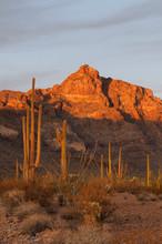 USA, Arizona, Organ Pipe Cactu...