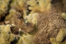 USA, Arizona, Buckeye. Cactus ...