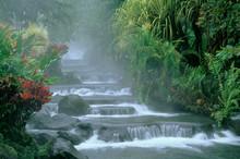 Costa Rica, Tabacon Hot Springs, Below Arenal Volcano, Tropical Vegetation Along Natural Hot Springs.